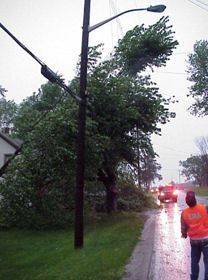 Fallen tree laying on power links in storm