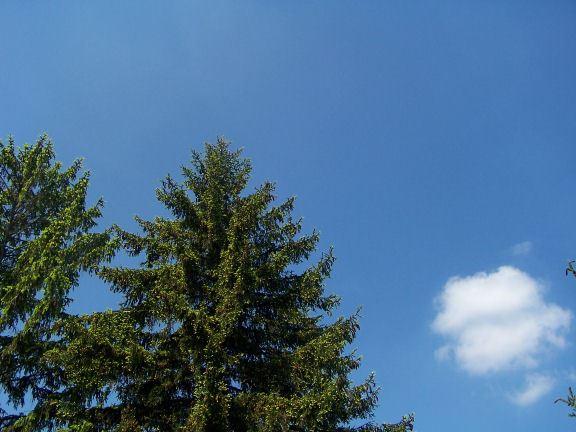 Tree Tops and Sky