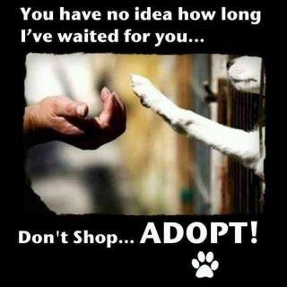 You have no idea how long I've waited for you... Don't Shop... Adopt!